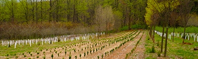 wholesale tree nursery maryland
